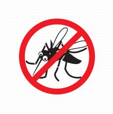 Saiba como eliminar os criadouros do Aedes Aegypti